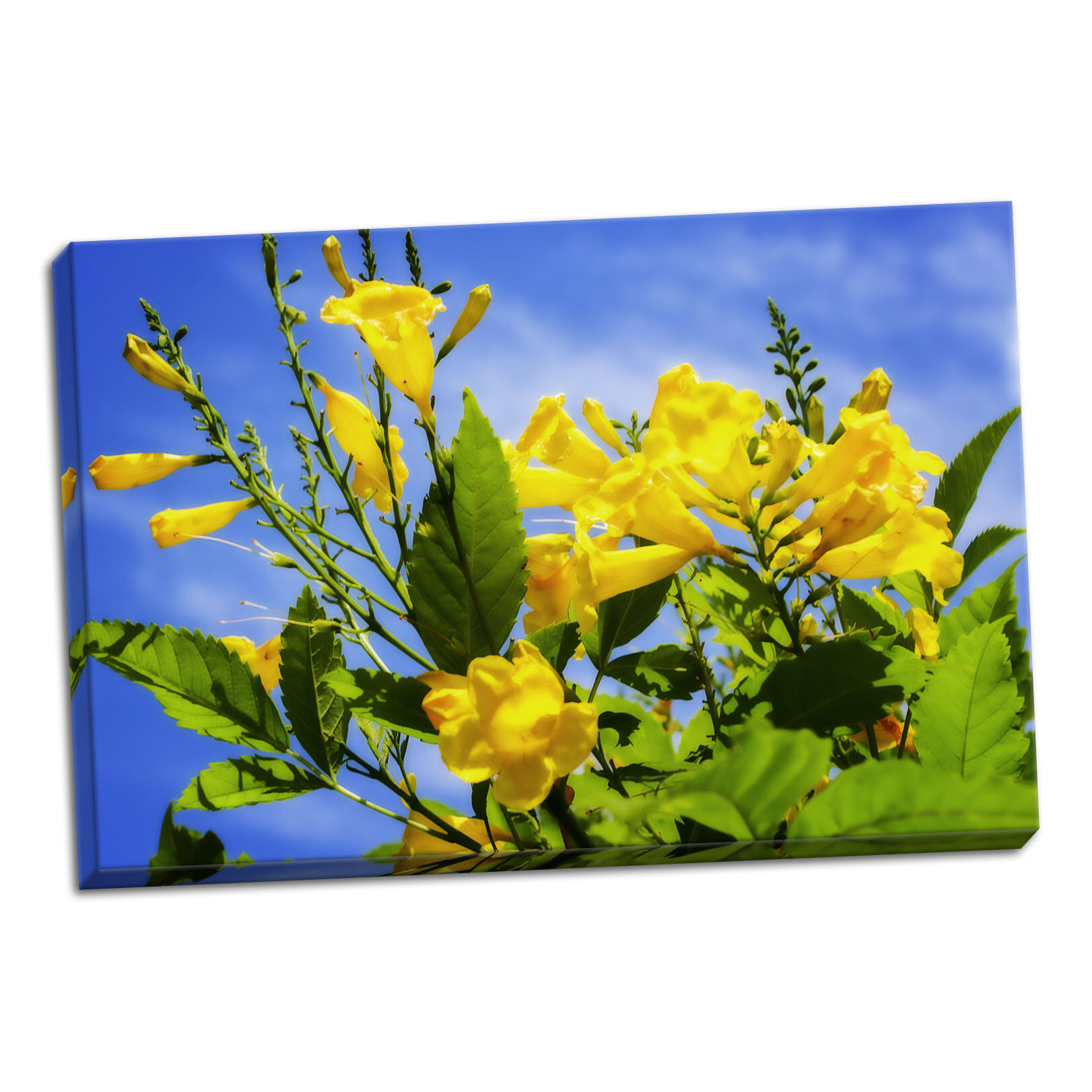 August Grove Yellow Elder Flower Photographic Print On Wrapped