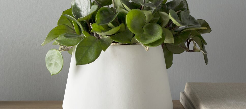 white gray planter deals
