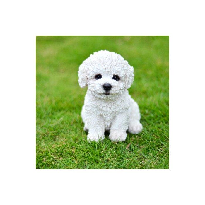 Bichon Frise Puppies Nc