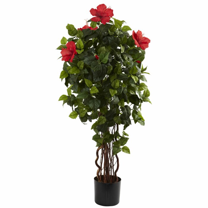 Darby Home Co Hibiscus Tree In Pot Reviews Wayfairca