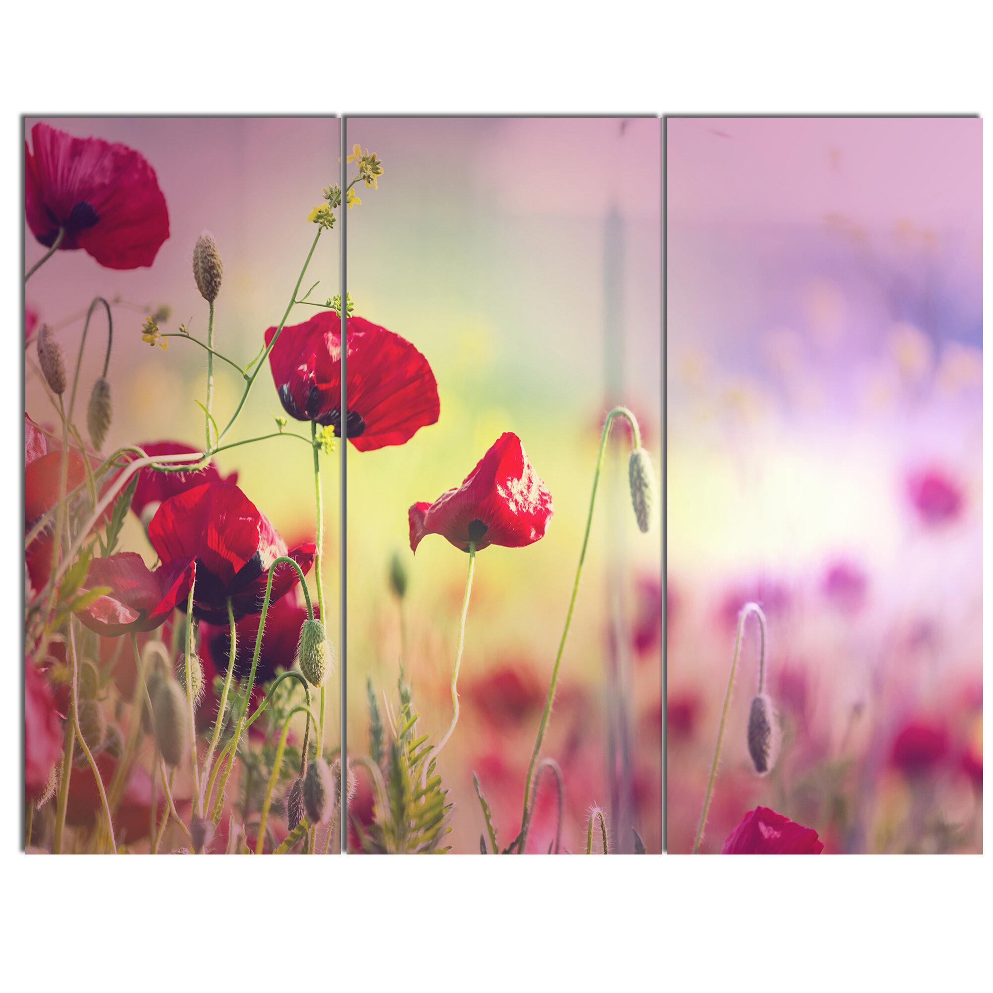 DesignArt \'Beautiful Poppy Flower Garden\' 3 Piece Photographic Print ...
