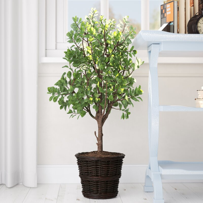 charlton home artificial potted natural ficus tree in basket