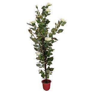 Indoor Floor Plants | Wayfair.co.uk