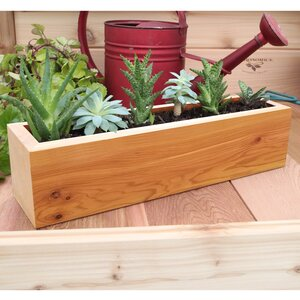 Succulent Cedar Planter Box