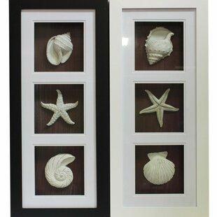 Etonnant Trendy Seashell Shadow Wall Decor Set (Set Of 2)