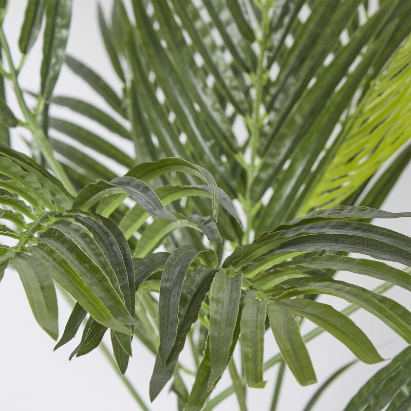Areca palm tree floor plant reviews joss main for Pictures of areca palm plants
