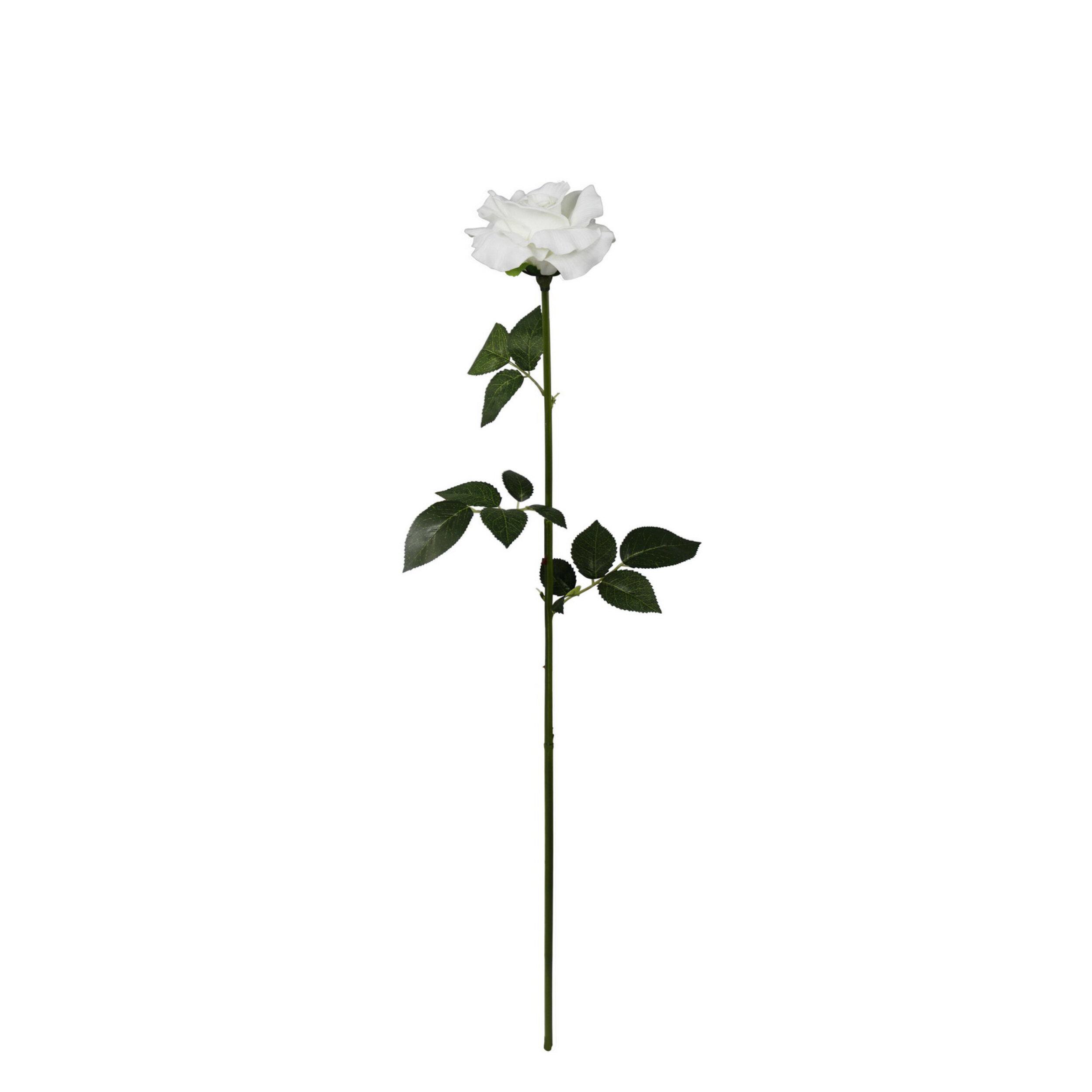 Single Stem Magic Touch Rose