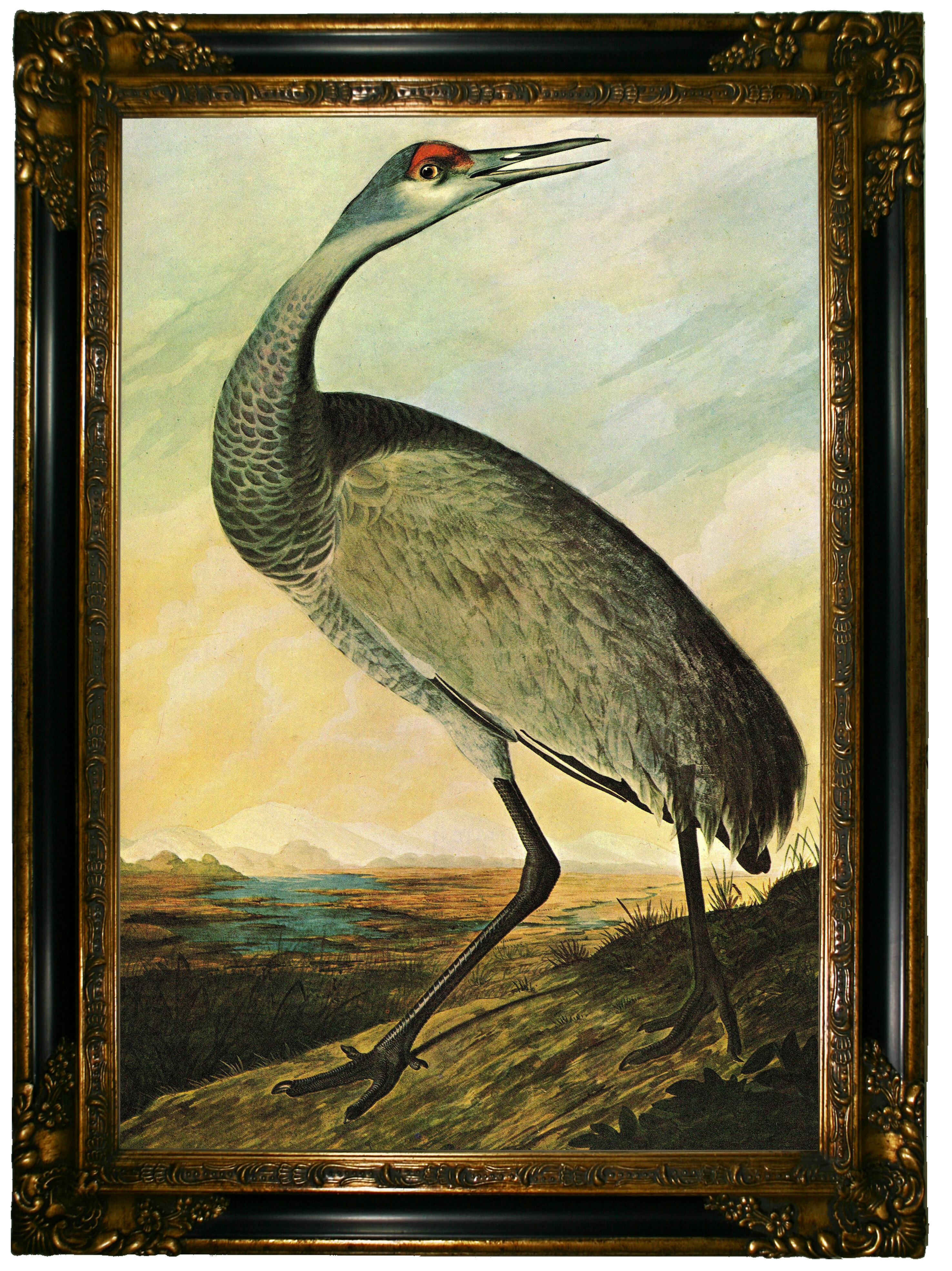Darby Home Co Sandhill Crane\' Framed Graphic Art Print on Canvas ...