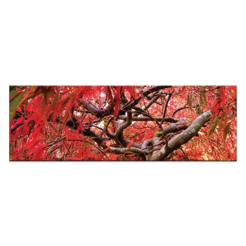 Japanese Maple by Andrew Brown Photographic Print Wrapped on Canvas