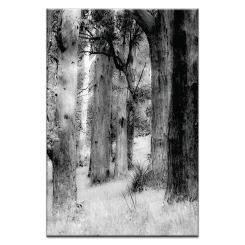 Though The Forest by Caroline Gorka Photographic Print on Canvas