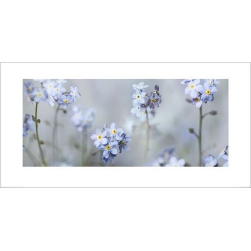Forget Me Nots by Ian Winstanley Photographic Print
