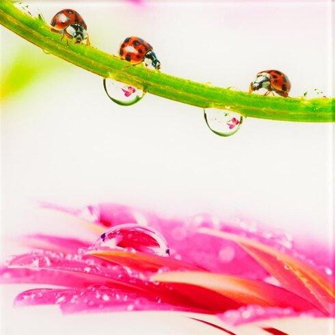 Ladybirds Photographic Print