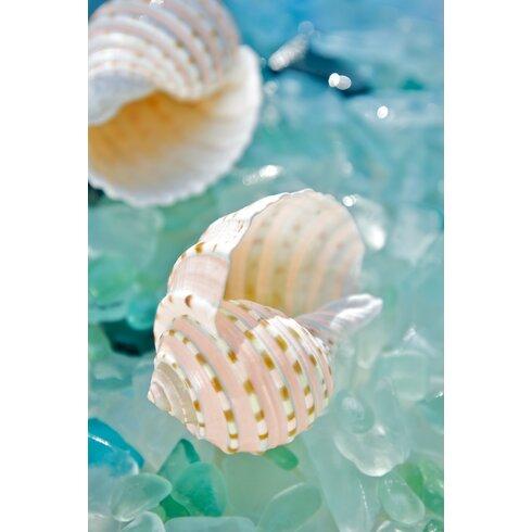 Sea Glass with Sea Shells 1 Photographic Print