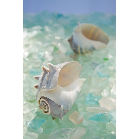 Sea Glass with Sea Shells 4 Photographic Print on Canvas