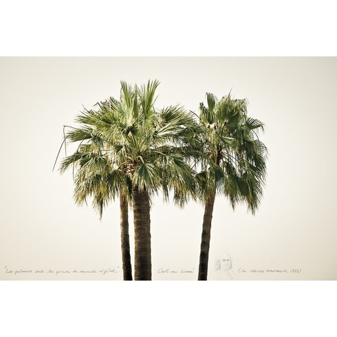 'Palms 1' by Philippe David Framed Photographic Print