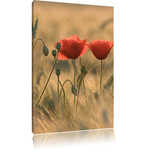 Poppies at Dusk Photographic Print on Canvas