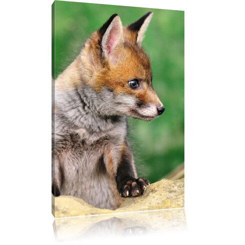 Baby Fox Photographic Print on Canvas
