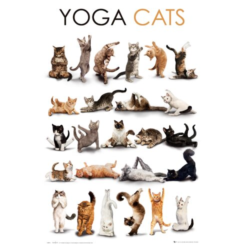 Yoga Cats Graphic Art Plaque