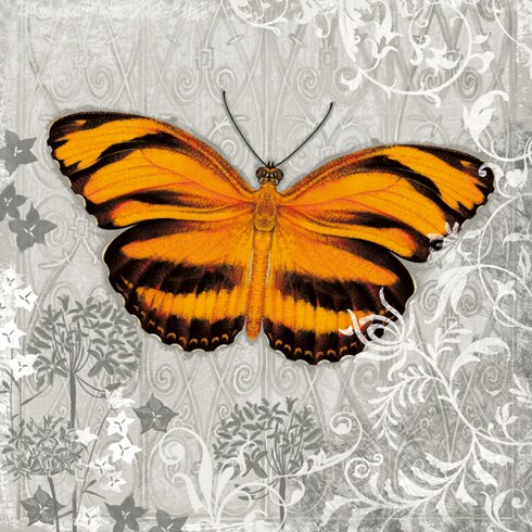 "Grafikdruck ""Orange Butterfly I"" von Alan Hopfensperger"