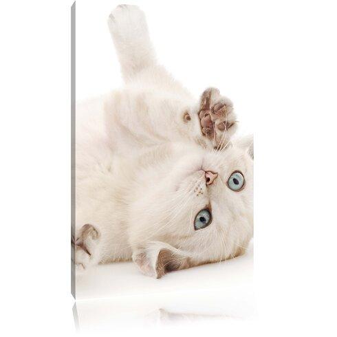 Little Cat Photographic Print on Canvas