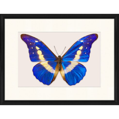 Butterfly Series 25 Framed Graphic Art