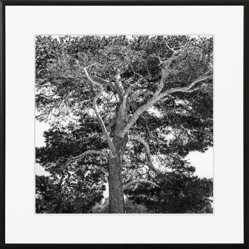 'Riviera 3' by Laurence David Framed Photographic Print