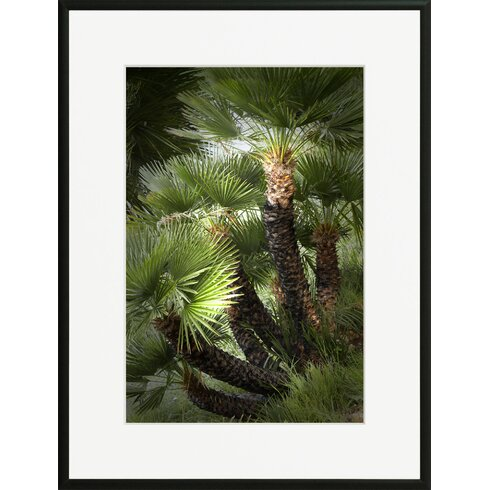 'Chamaerops 2' by Laurence David Framed Photographic Print
