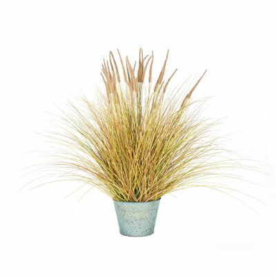 Breakwater Bay Dogtail Grass Bush in Round Metal Pot Size: 45 H x 36 W x 36 D, Leaves Color: Brown