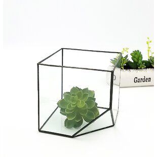 Northcutt Tabletop Succulent Glass Terrarium
