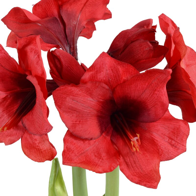 New Growth Designs Faux Amaryllis Plant Reviews