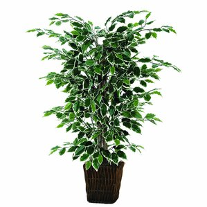 faux variegated ficus plant in pot