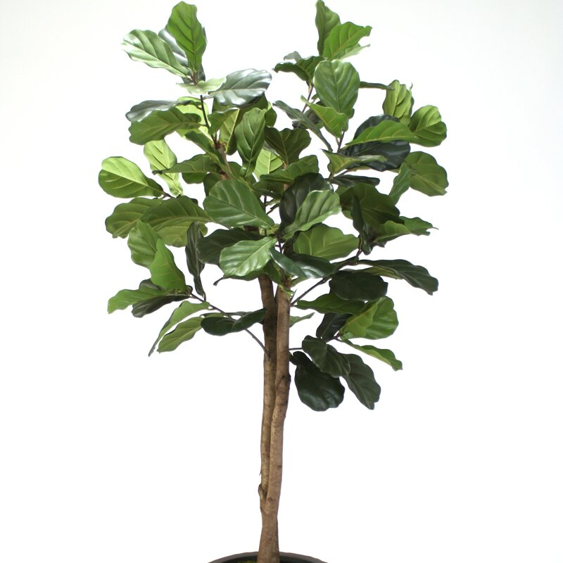 fiddle leaf fig tree in planter - Fiddle Leaf Fig Tree