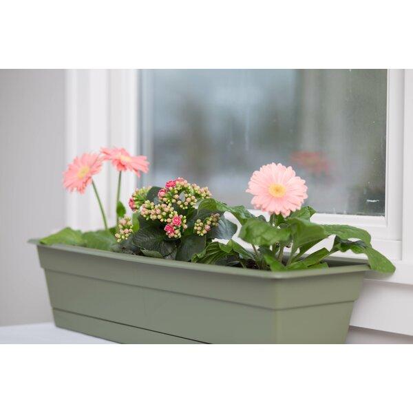 Bloem Dura Cotta Plastic Window Box Planter & Reviews   Wayfair