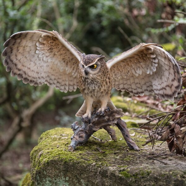 Hi Line Gift Ltd Eagle Owl On Branch With Open Wings