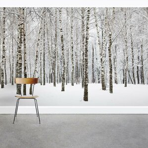 Snow Covered Winter Birch Trees 8u0027 X 144