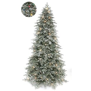 Frosted Stowe Lit 7.5u0027 Green Spruce Artificial Christmas Tree With 713  Multi Colored Lights