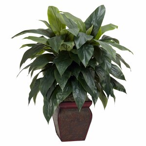 Cordyline Floor Plant in Decorative Pot