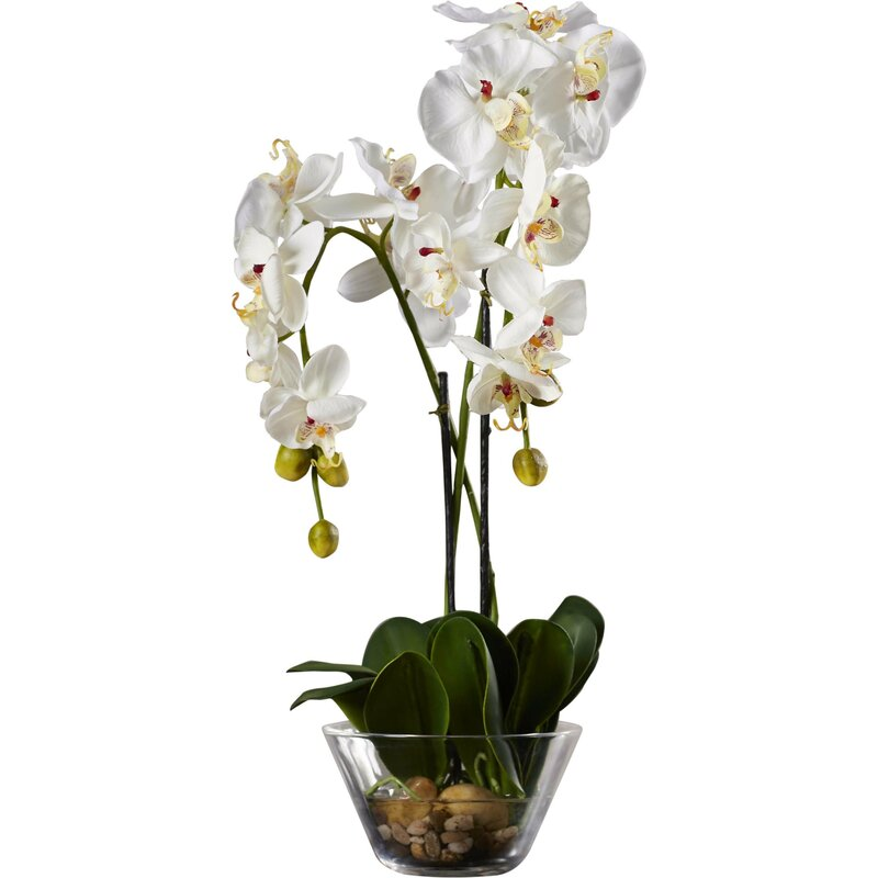 Three Posts Phalaenopsis Silk White Orchid In Glass Vase