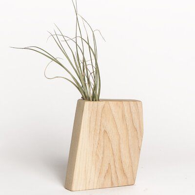 Boyce Studio Wyatt Jr. Air Plant Holder Wood Pot Planter Finish: Ash