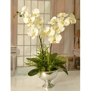 Well-known White Orchid Arrangements | Wayfair KW79