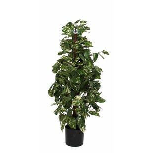 Indoor Floor Plants   Wayfair.co.uk