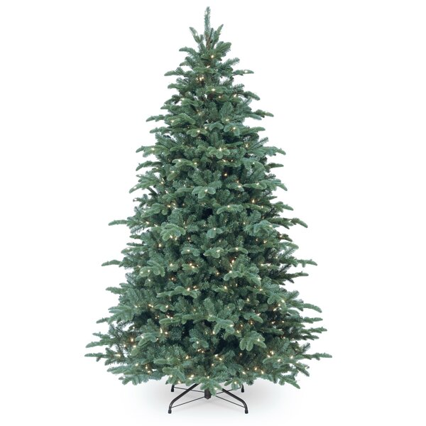 - Blue Spruce Christmas Tree Wayfair