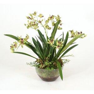 Green Vanda Orchids, Maiden Hair Fern in Glass Bowl