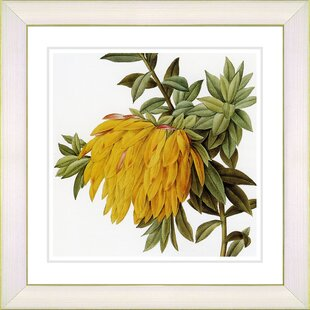 Vintage Botanical Prints | Wayfair