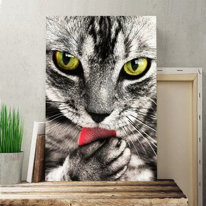 Tabby Cat Licking Paw Photographic Print on Canvas