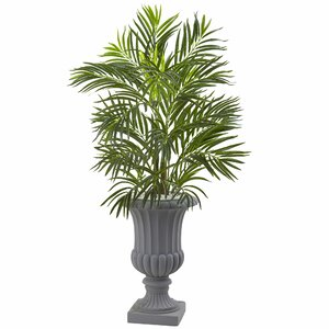 Areca Palm Tree in Urn