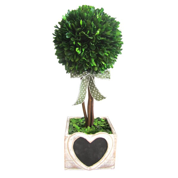 Jeco Inc Preserved Boxwood Topiary In Decorative Vase Wayfair Ca