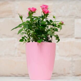 Pink planters youll love wayfair save to idea board mightylinksfo