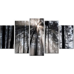 Sunbeams Through Black White Forest 5 Piece Wall Art On Wred Canvas Set