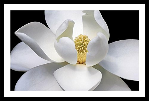 Latitude Run 'White Magnolia Flower Closeup' Framed Photograph Print | Wayfair